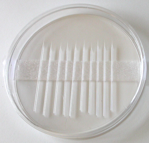 Pre-Pulled Microcapillary Needles (10/pack)